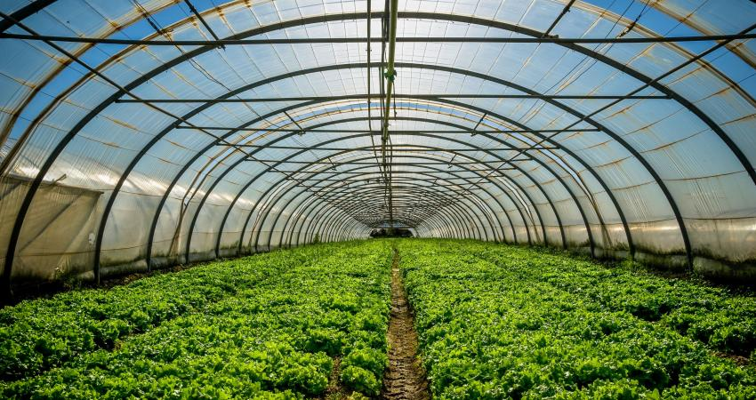 agriculture01.jpg